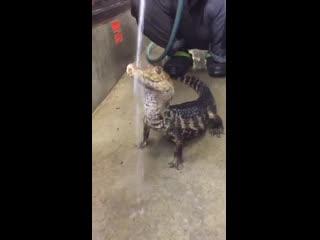 Просто крокодильчику хорошо