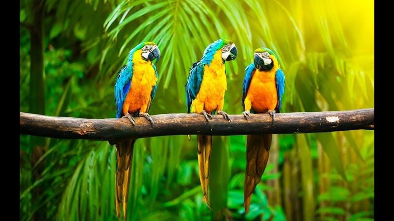 Дикая природа Австралии Большие попугаи
