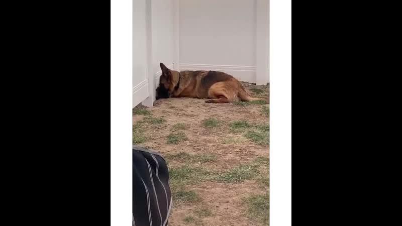 Animals_videoo_20200507_172948_0.mp4