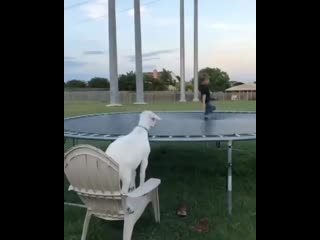 Who-doesnt-like-a-good-jump-on-the-tramp.mp4