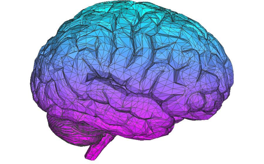 картинки мозга на белом фоне привороты это самые