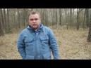 В Горном Алтае уничтожается и вывозится в Китай кедровый лес.