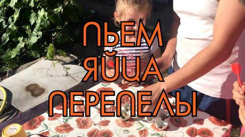 ПЬЕМ сырые домашние перепелиные ЯЙЦА Дневник Птицевода №5