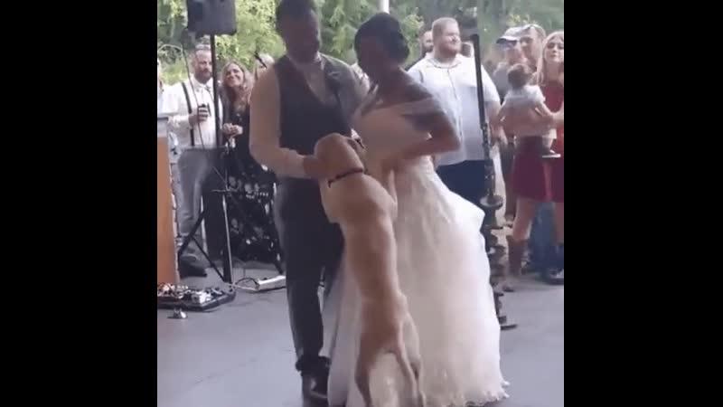 поздравления и танец от лучшего друга семьи