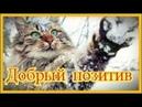 Смешное про животныхПриколы с котами Видео про котов КошкиПозитивСоздай себе хорошее настроение