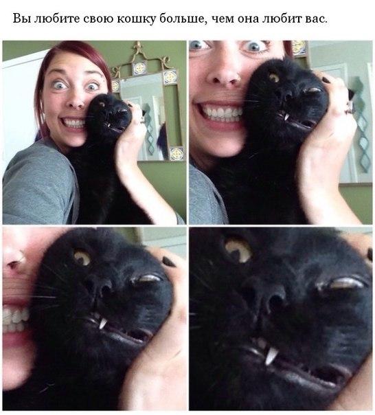 Чувства, которые знакомы владельцам кошек
