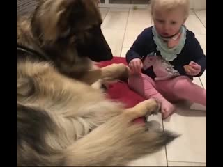 Вот почему мы любим собак