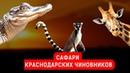 САФАРИ КРАСНОДАРСКИХ ЧИНОВНИКОВ | Журналистские расследования Евгения Михайлова