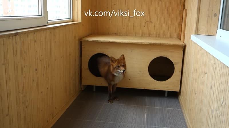 Викси и Сильвер (Злая лисичка)