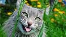 приколы с котами 7 минут смеха ДО СЛЕЗ / СМЕШНЫЕ ЖИВОТНЫЕ / приколы с животными 2020