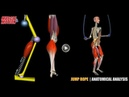 Jump Rope | Anatomical Analysis Active Muscles