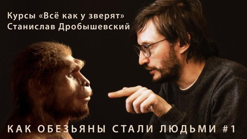 Станислав Дробышевский Как обезьяны стали людьми 1 курсы юного натуралиста Всё как у зверят