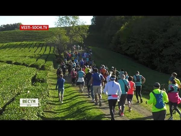 Бег по чайным плантациям: соревнования легкоатлетов в Сочи