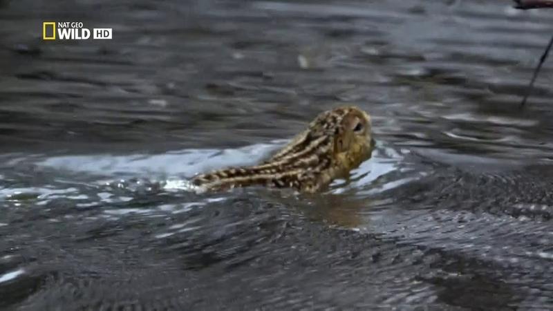 Дикая природа Миссисипи 2 Серия Великий потоп