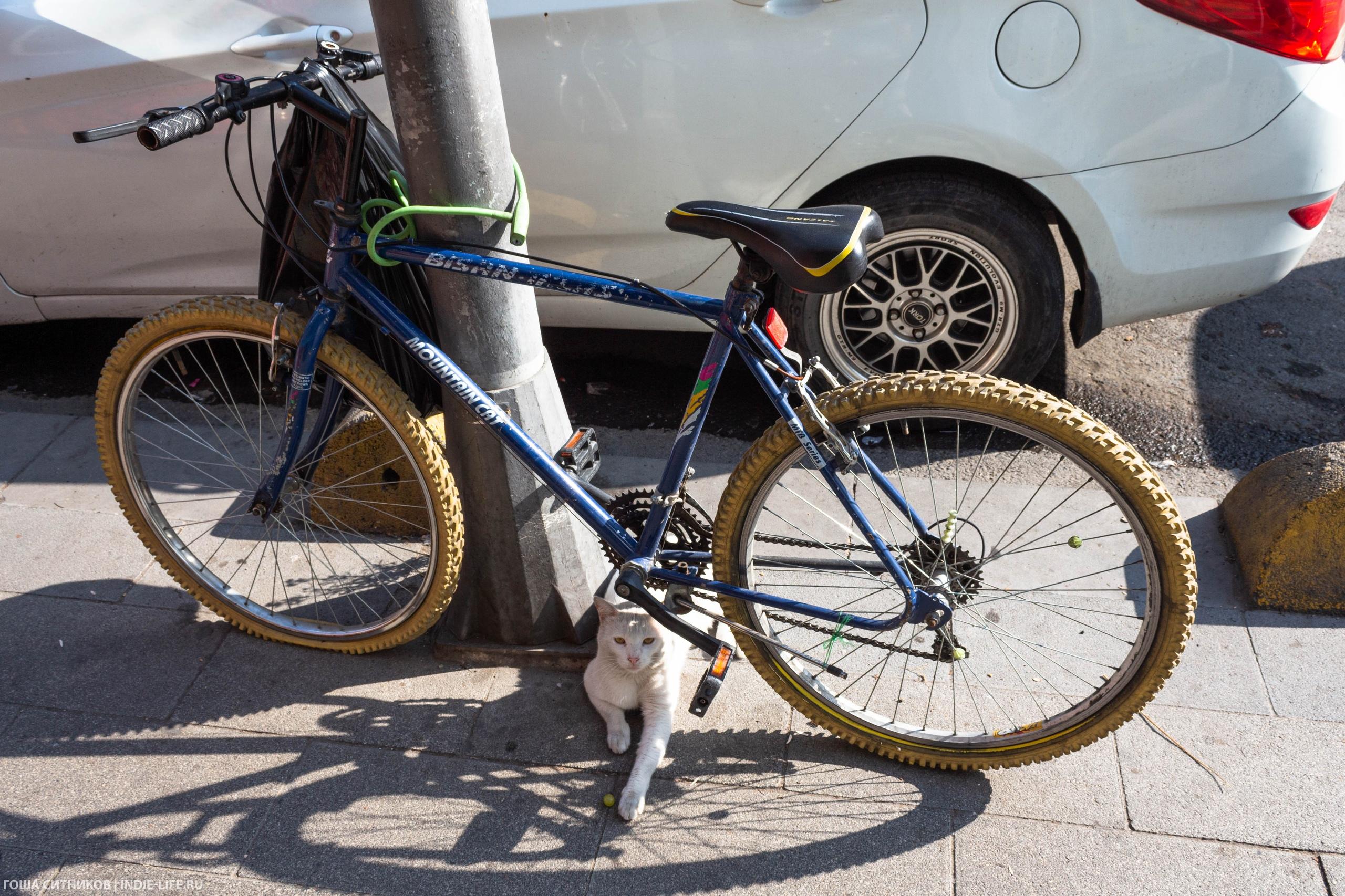 Кот под велосипедом