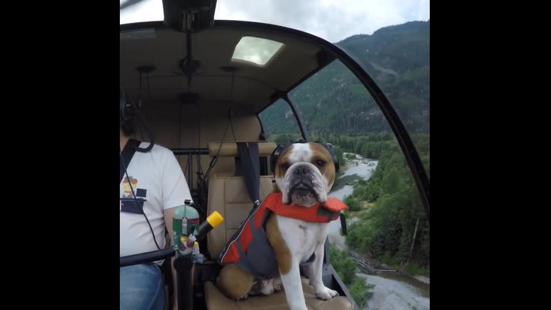 My dad takes me on some pretty incredible adventures! I'm one lucky lil' bulldog.