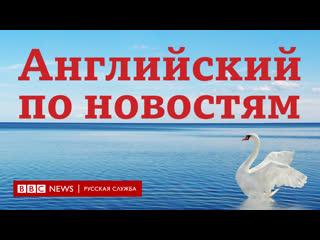 Учим английский язык по новостям. серия lingohack the hungry swans / learn english