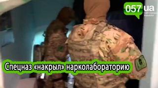 Спецназ «накрыл» нарколабораторию по производству элитной конопли в Харькове