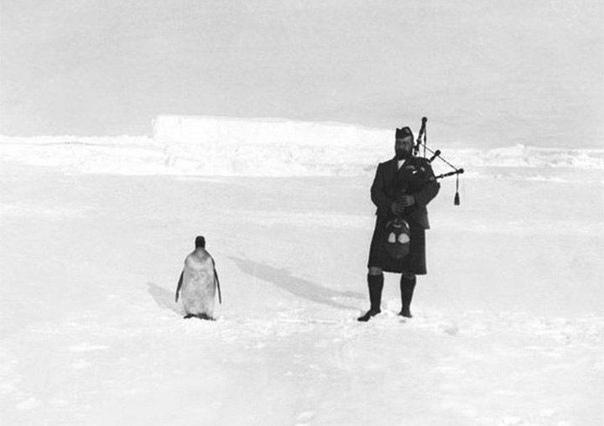 Волынщик Гилберт Керр и пингвин, 1903 г.