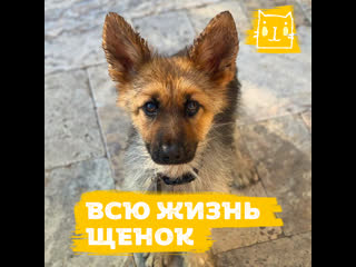 Пес, который никогда не вырастет
