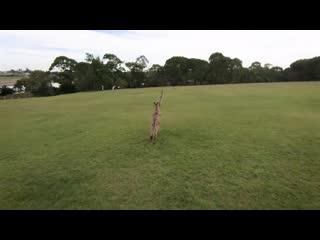 - droneadventures Cinewhoop nature explore CWAKEFPV