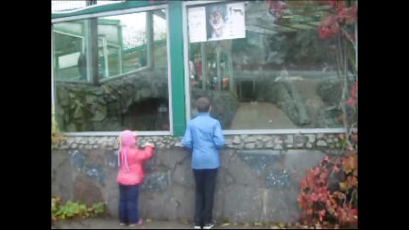Ленинградский зоопарк Октябрь 19, 2019