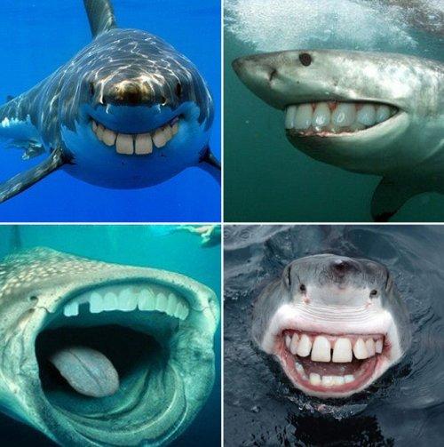 Животные с человеческими ртами это готовые персонажи фильма ужасов Только мы подумали, что уже привыкли к странным фотожабам, таким как дети с зубами, животные без шей или безносые знаменитости,