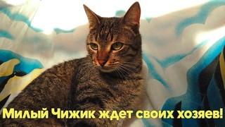 Молодой, красивый, крупный КОТ ЧИЖИК очень хочет стать домашним! Подарите котику дом!!!