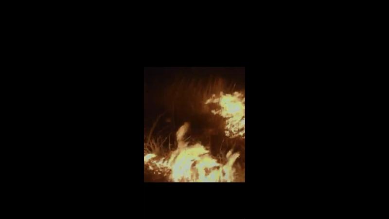 Видео от Чипсы с луком