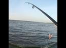 Попался карась рыбалка на карася!