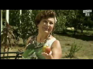 Сваты Натюрморт девочка и персики (480p).