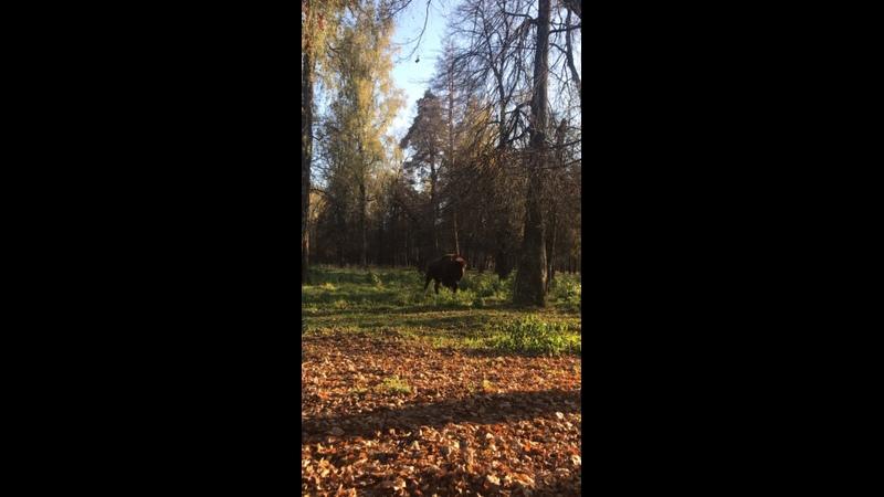 Видео от Ники Усатовой