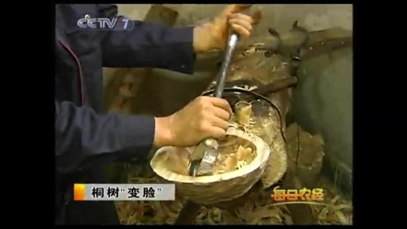 Тунг, или Масляное дерево (лат. Aleurítes) Ю`Тун (тунг китайский), либо ТунШу (тунговое дерево).