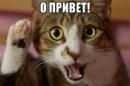 Фотоальбом Екатерины Алексеевой