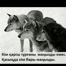 Персональный фотоальбом Рахата Алиева