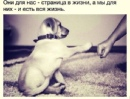 Персональный фотоальбом Батыра Сангаджиева