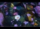 Морской огурец дышит