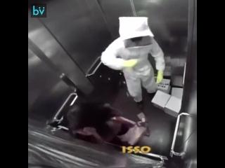 Весёлый пчеловод шалит в лифте