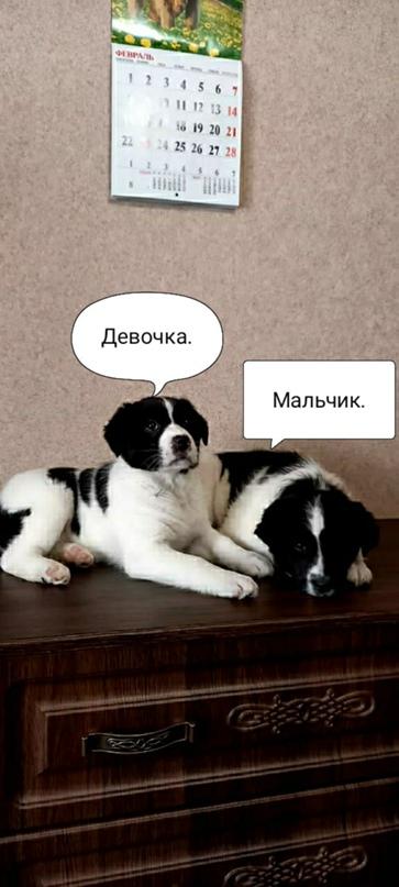 ОРСК!!! НОВОТРОИЦК!!!  В черте города за | Объявления Орска и Новотроицка №13878