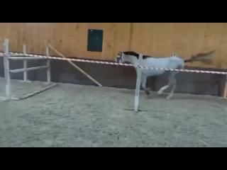 Видео от Продажа лошадей