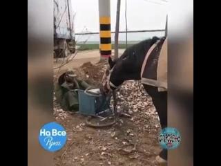 Животные намного преданнее людей))))))))