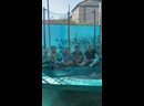 Видео от Алисы Князевой