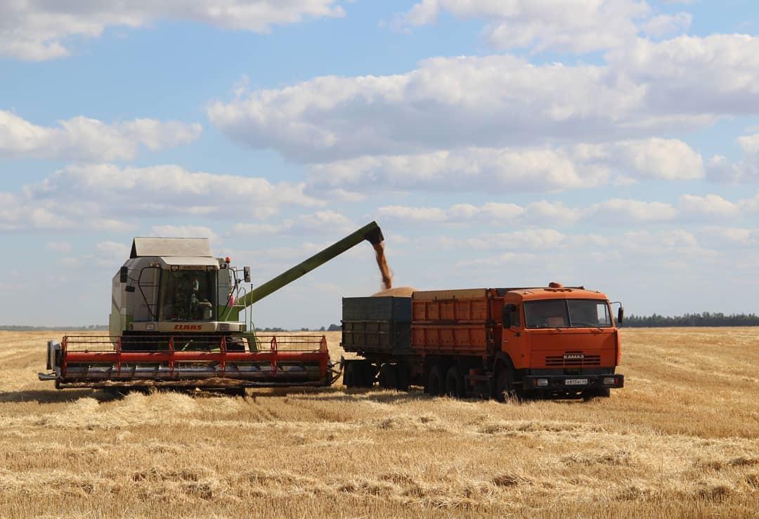 В Петровском районе зерновые и зернобобовые культуры в аграрных хозяйствах убраны на площади 48 871 гектар