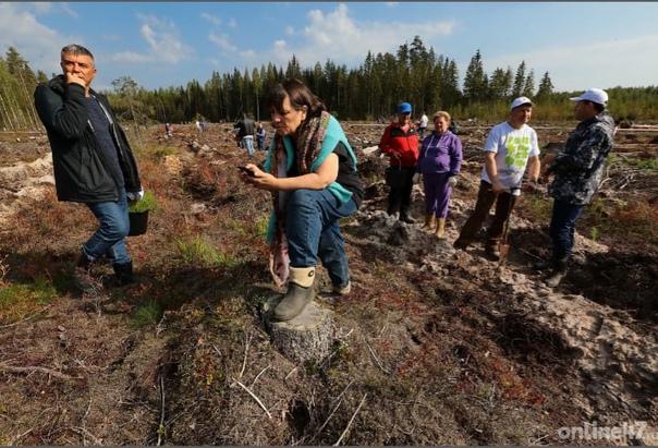 Правительство Ленобласти поздравило работников лес...