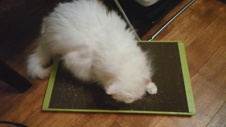 Новая когтеточка у моих котов
