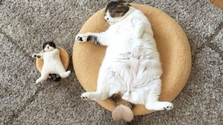 Funny Cats 😹 - Don't try to stop laughing 🤣 - Cats In Funny Situations