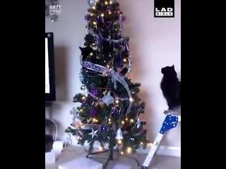Хозяйка на Всю Голову () кошки и новый год