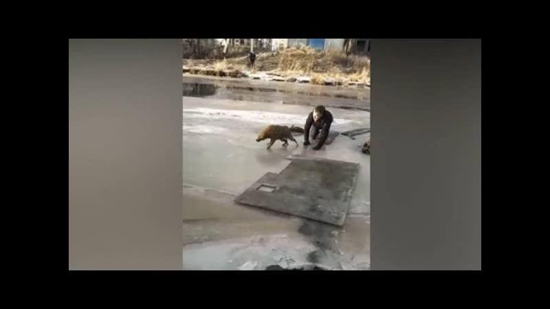 Парень рискнул и спас собаку из подо льда