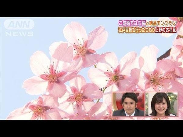 行ったつもり花見・・・満開!上野公園「シダレザクラ」(200320)