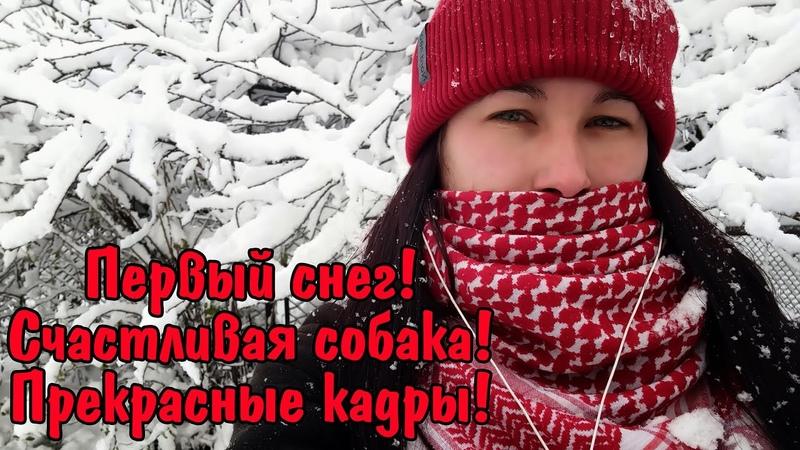 Первый снег Счастливая собака Красивый заснеженный город